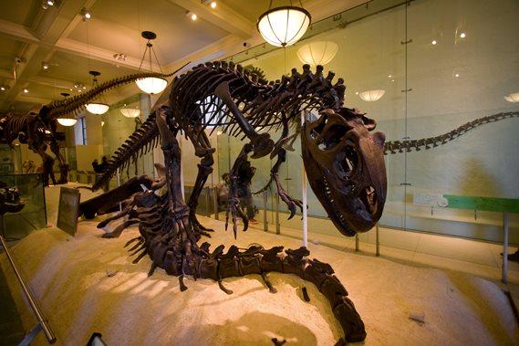 Mikä on tarkin tapa dating fossiileja